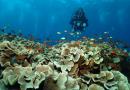 Lomba Photo Bawah Air dan Bersih Bersih Laut WOD & CTD 2021 dalam rangka merayakan Hari Laut dan Hari Segitiga Karang Dunia (World Ocean Day dan Coral Triangle Day) Tahun 2021